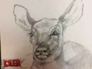 deer_pw