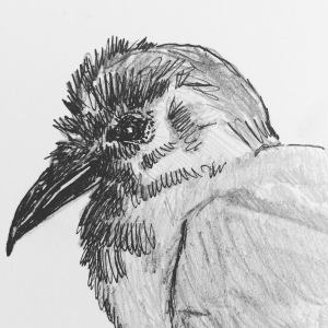 raven-headdetail-pw
