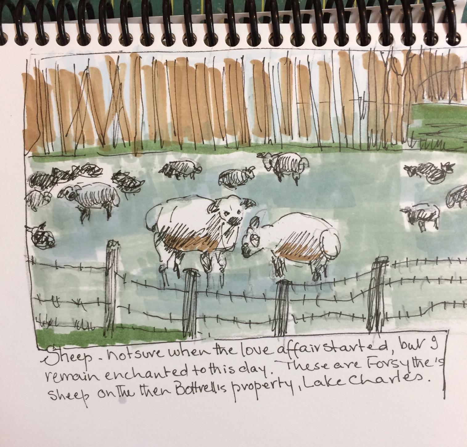 sheep_pw